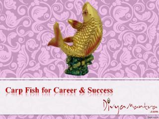 Carp Fish for Career & Success.ppt